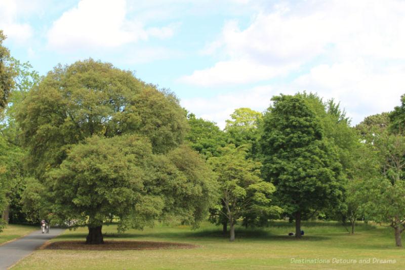 Trees at Kew Gardens