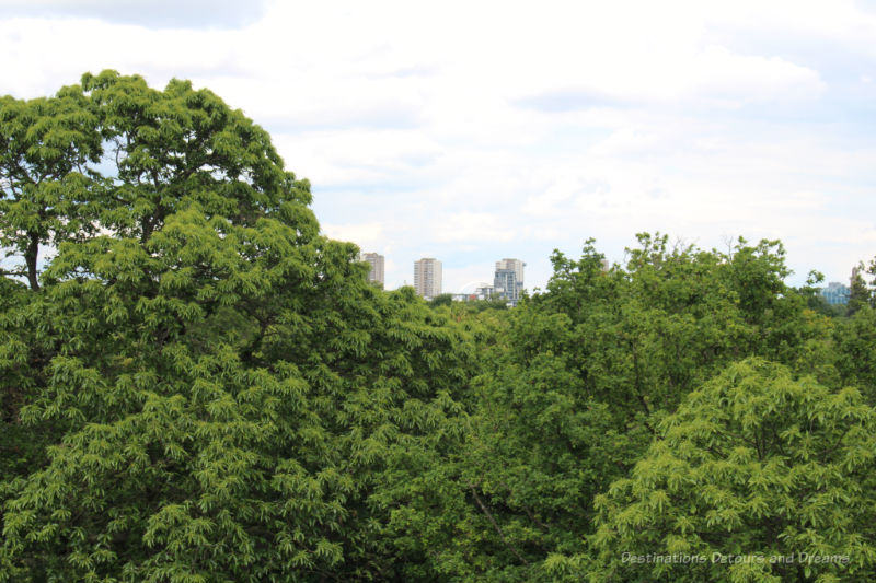 Tall buildings of the city beyond the trees at Kew Gardens Treetop Walkway