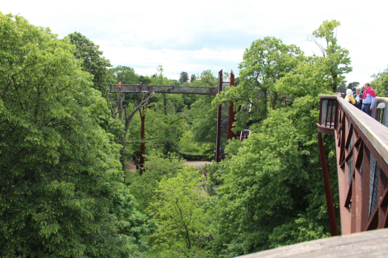 Steel walkway looping through treetops at Kew Gardens