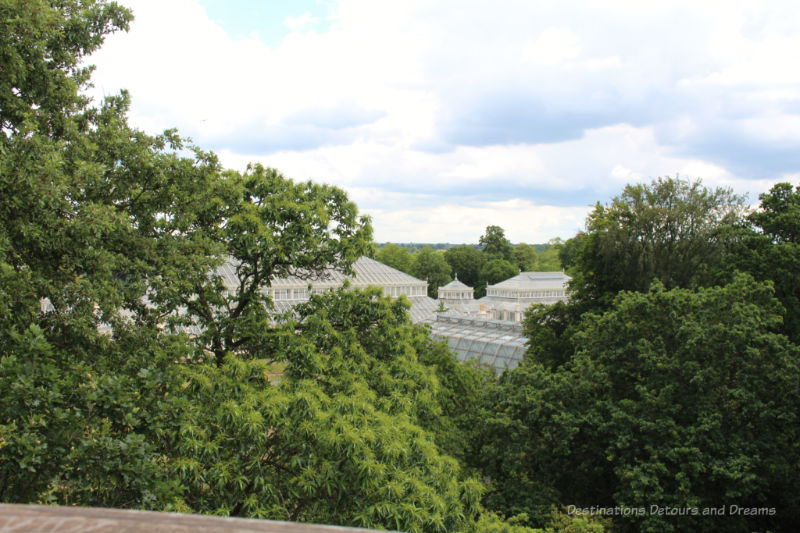 Ceilings of Kew Gardens glasshouses amid the tops of trees as viewed from above in the Treetop Walkway