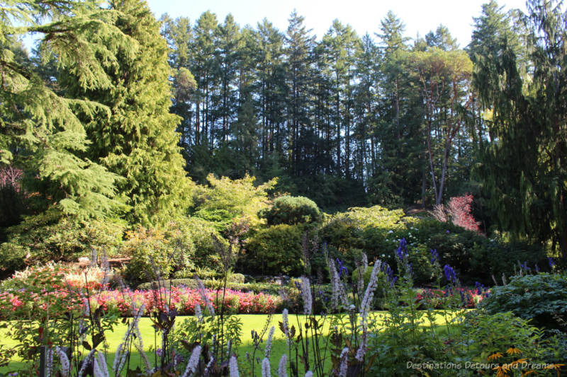 Flowers and shrubs with tall trees in the background