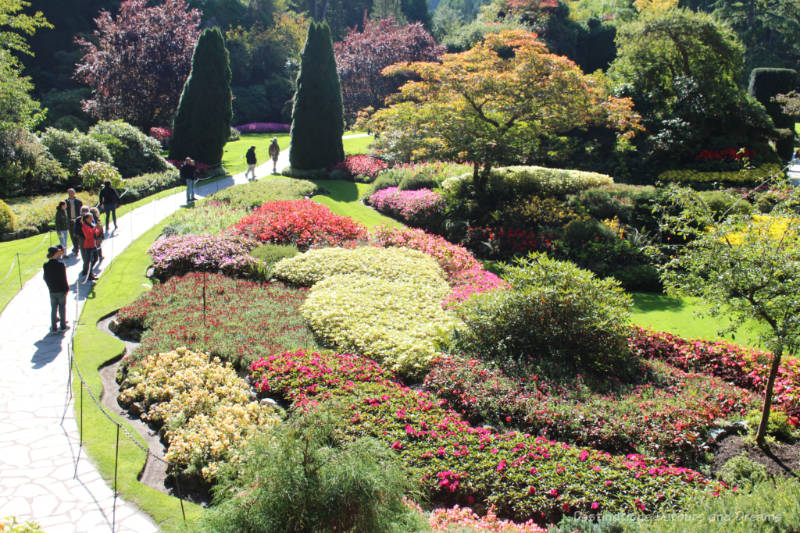 Curved beds of colourful flowers at Butchart Gardens