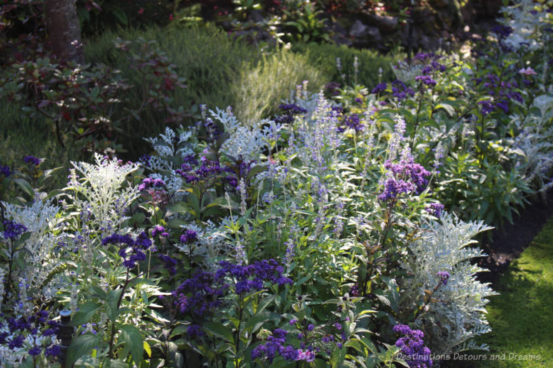 Mix of purples blooms and silver foliage in a garden bed at Butchart Gardens