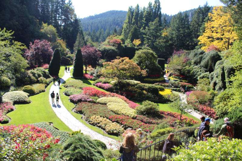 Looking down over the lush and colourful Sunken Garden at The Butchart Gardens