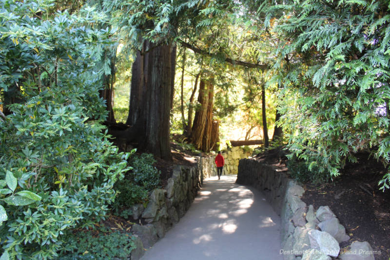 A paved, stone-edged walkway through tall trees at Butchart Gardens