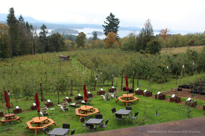 Apple orchard with view of ocean and mountains