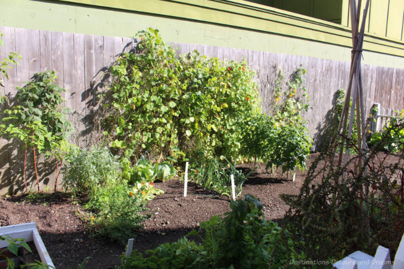 Heritage vegetable garden