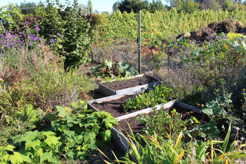 Garden beds with vineyard in background at The Roost
