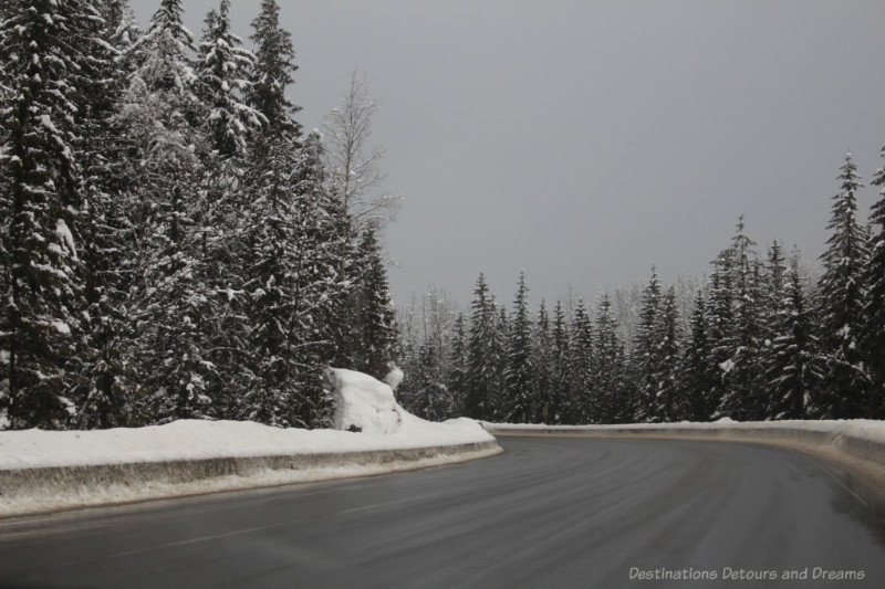 Snow-covered fir trees on a British Columbia mountain highway curve
