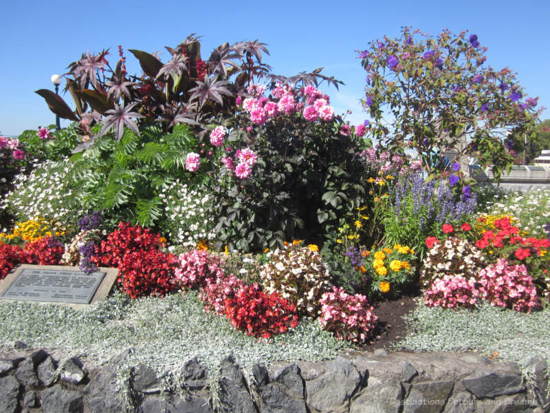 Grouping of different coloured flowering plants with a rock edging