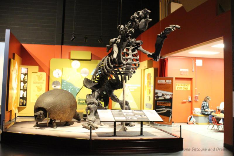 Full skeletal reconstruction of a pliosaur