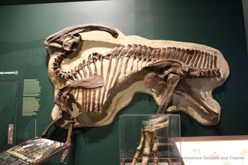 Pliosaur fossils mounted on a wall at Manitoba Museum