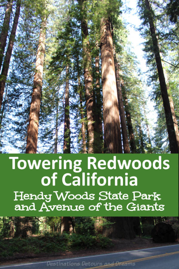 Walk and Drive Through Towering Redwoods in California - a visit to Hendy Woods State Park and to Avenue of the Giants #California #redwoods #AvenueoftheGiants #HendyWoods