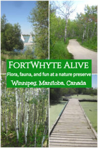Connect with nature at FortWhyte Alive in Winnipeg, Manitoba, Canada: nature trails, wildlife viewing, outdoor recreation One of top attractions and things to do in Winnipeg, Manitoba #Winnipeg #Manitoba #Canada #travel
