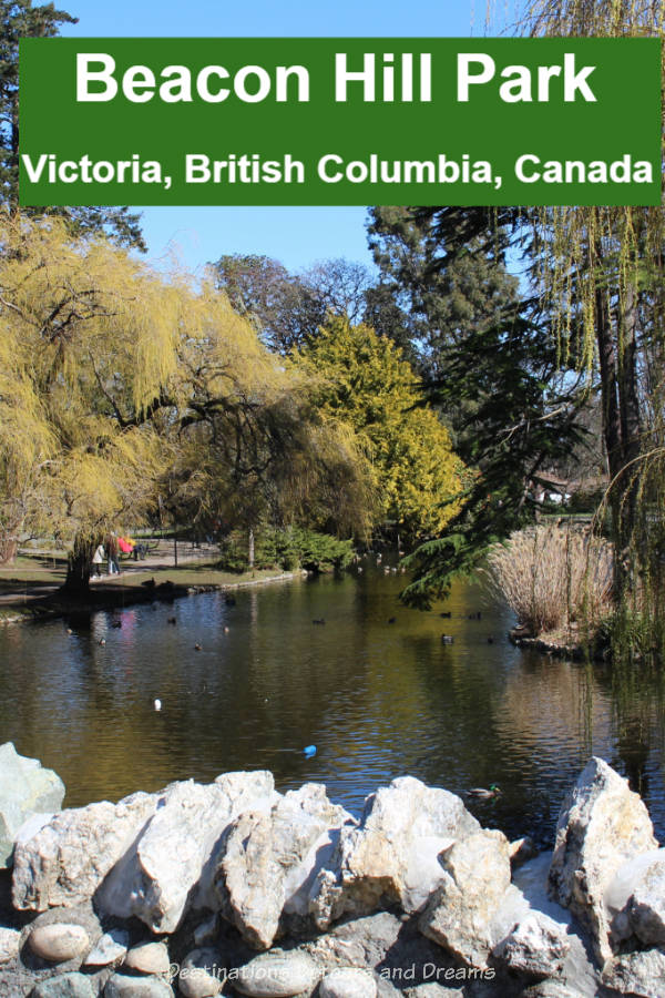 Beacon Hill Park: a 200-acre park in downtown Victoria, British Columbia with trees, paths, ponds, gardens, playgrounds, children's farm #Canada #BritishColumbia #Victoria #park