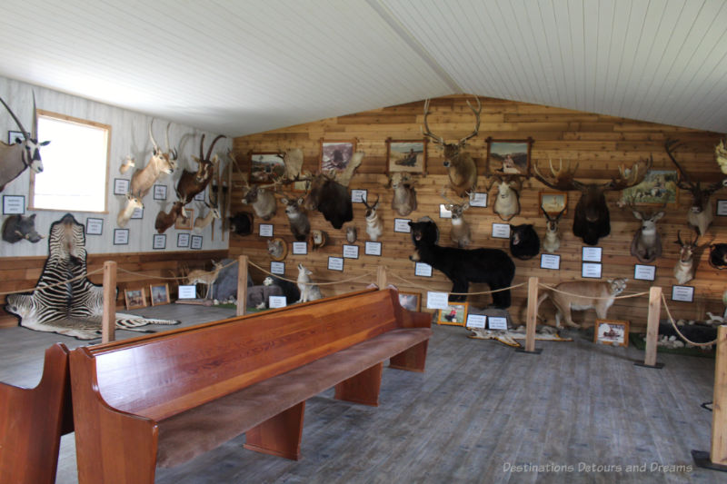 A display room with various taxidermy animals mounted on walss
