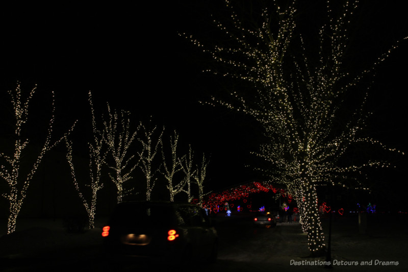 Car's driving through a Chrtistmas light display - trees on either side are covered in white lights; red lighted arbor ahead