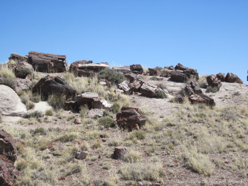 Pieces of petrified wood in a mountain grassland area inside Petrified Forest National Parkl