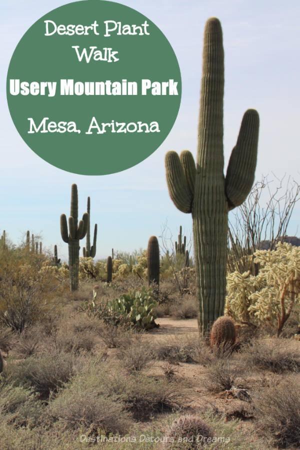 Desert Plant Walk at Usery Mountain Park, Mesa Arizona #Arizona #desert #park #Mesa #hike