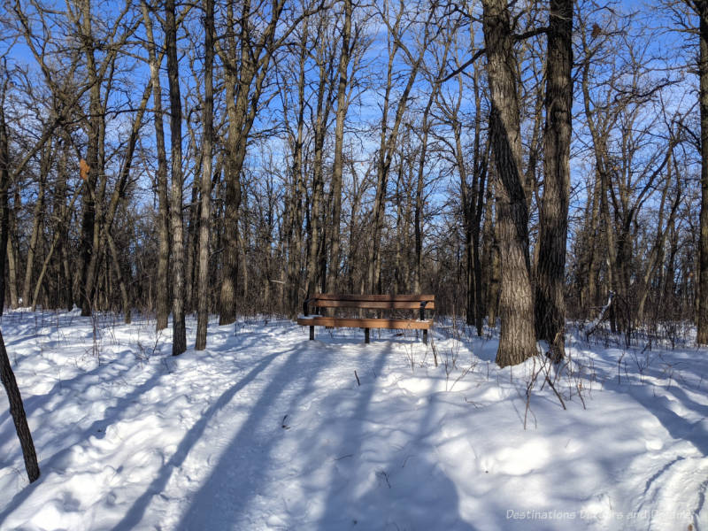 Park bench in a snow-covered oak forest