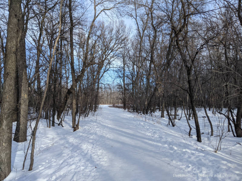 Snow packed trail through barren deciduous trees