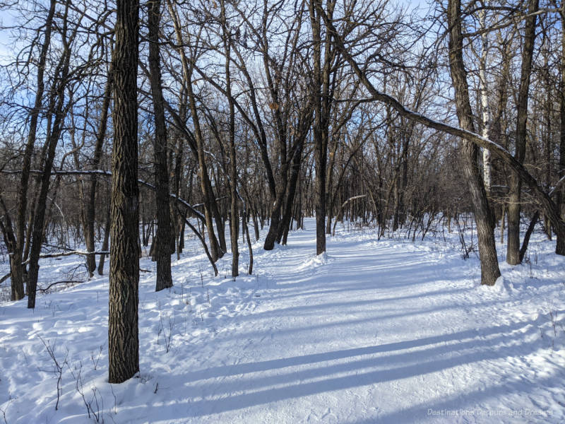 Snow packed trail through oak forest