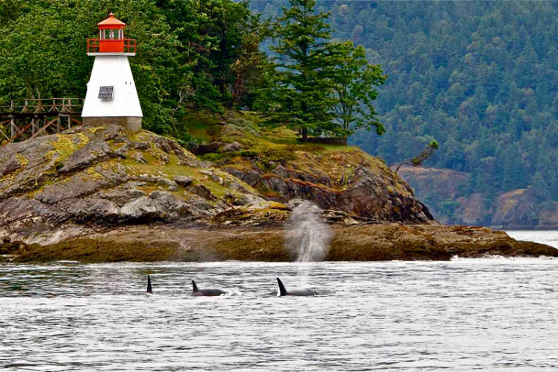Small lightouse on rocky crag with whales in water in front. Photo courtesy of San Juan Islands Visitors Bureau.