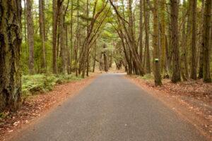 Road into tall forest. Photo courtesy of San Juan Islands Visitors Bureau.