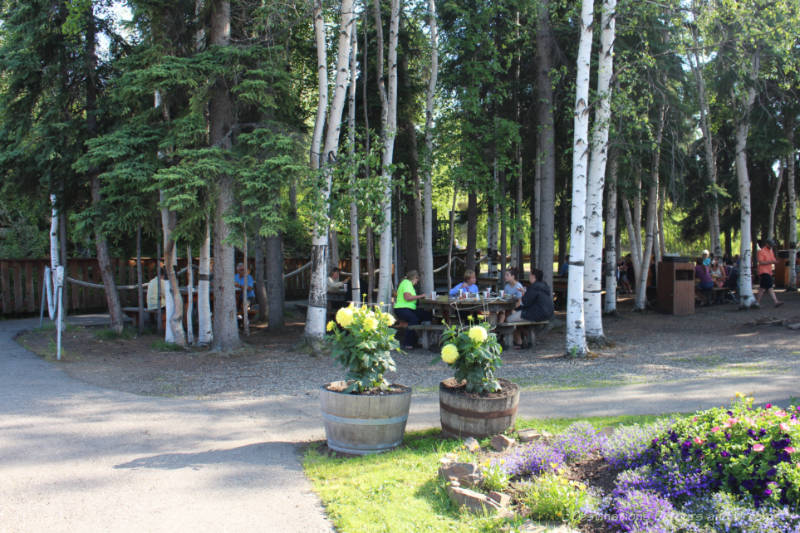 Picnic tables in a grove of birch trees