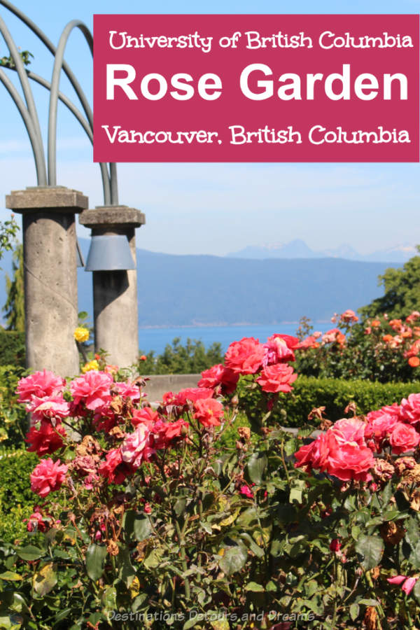 UBC Rose Garden: The rose garden at the University of British Columbia campus in Vancouver, Canada not only contains beautiful roses, it offers panoramic views of the sea and mountains