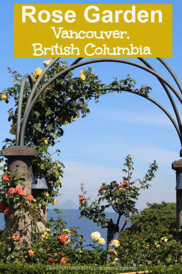 University of Britisg Columbia Rose Garden: The rose garden at the UBC campus in Vancouver, Canada not only contains beautiful roses, it offers panoramic views of the sea and mountains