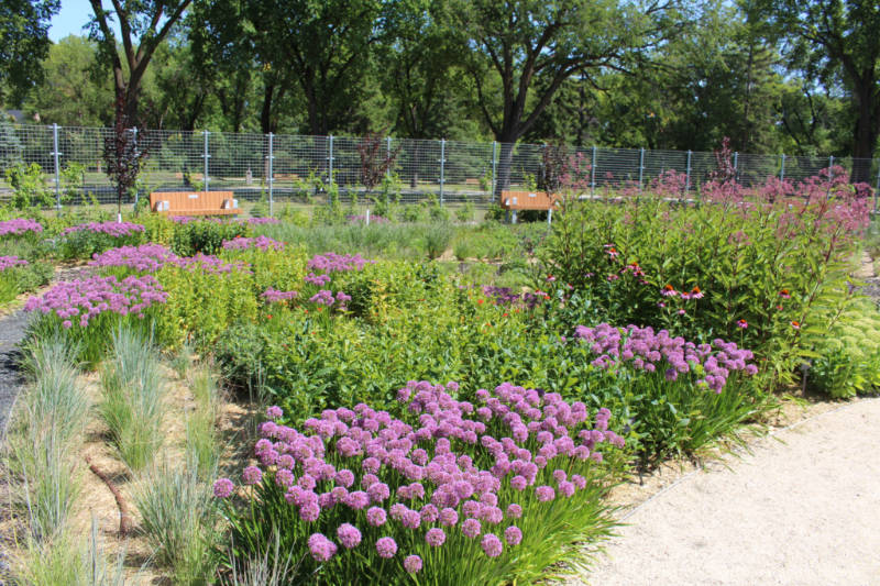 A bed of purple flowers amid green foliage with bench seating at the back at the Gardens at The Leaf in Winnipeg