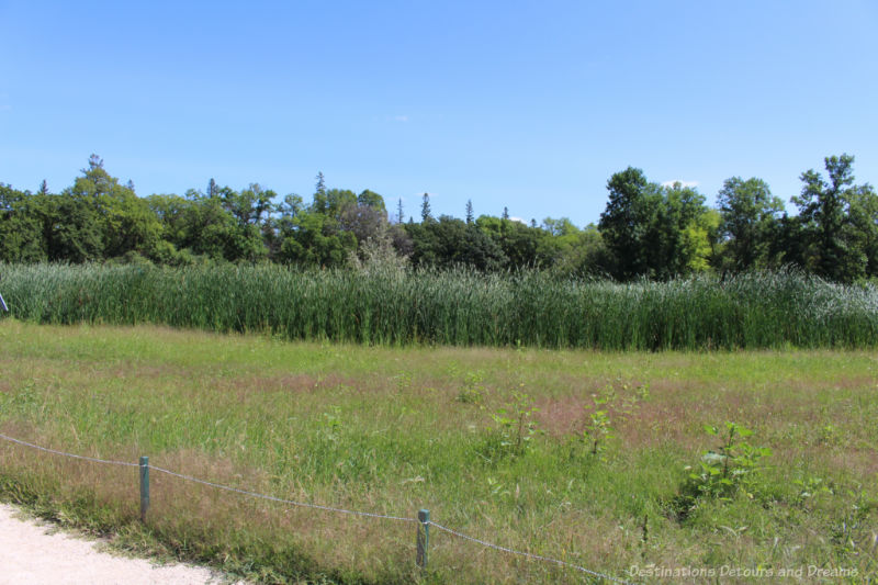 Native prairie grasses and shrubs at the Indigenous Peoples Garden at the Gardens at The Leaf in Winnipeg, Manitoba