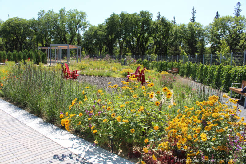 A bed of yellow and purple blooming flowers with a walking path around it and a seating area with four red chairs in the centre