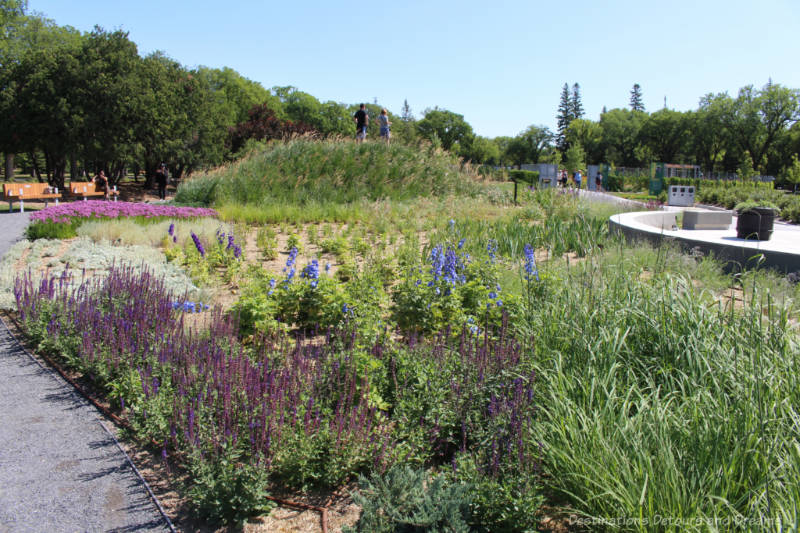 Colourful aromatic plants and hills of grasses with walkways on either side