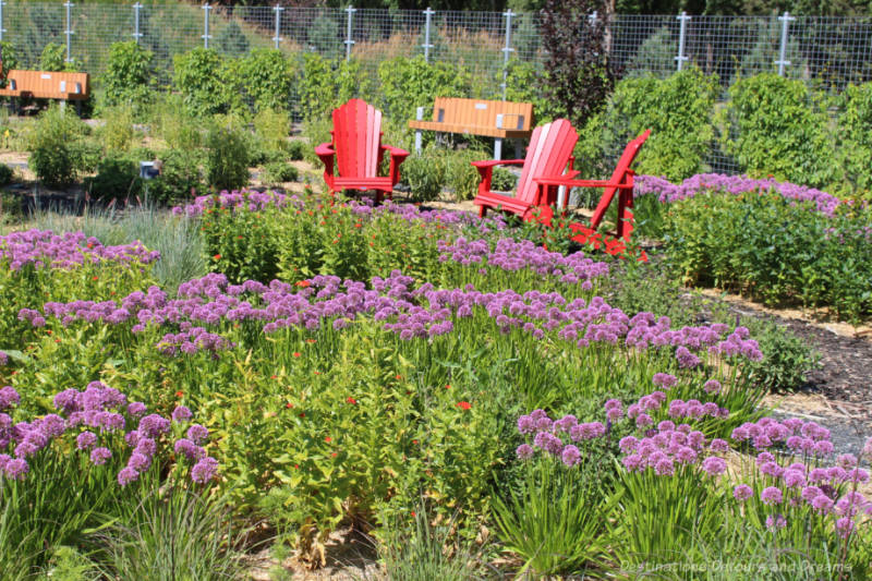 Red chairs and park benches at the edge of a flower bed with mostly purple blooming flowers