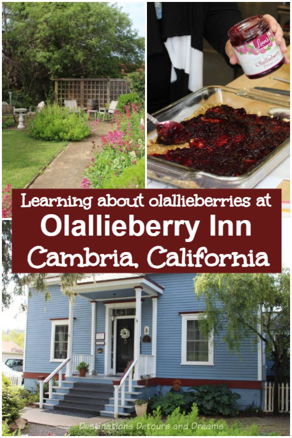 Olallieberries in Cambria: Learning about olallieberries and how to cook with them at the historic Olallieberry Inn in Cambria, Calilfornia