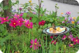Butterfly Magic at Assiniboine Park Zoo