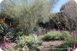 Gardens, Art and Sonoran Desert Beauty at Tohono Chul Park