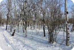Winnipeg Winter Fun at a Nature Preserve